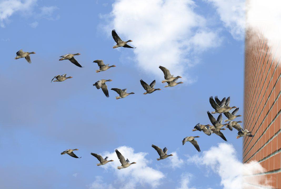 Aves Migratorias. El Mundo today